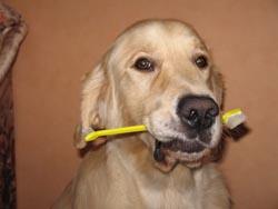 Стоматология для собак и кошек